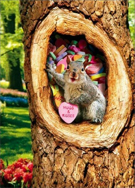 squirrel  tree  candy heart stand  pop