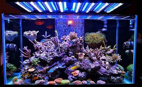 saltwater tank lights understanding marine aquarium lighting home aquaria