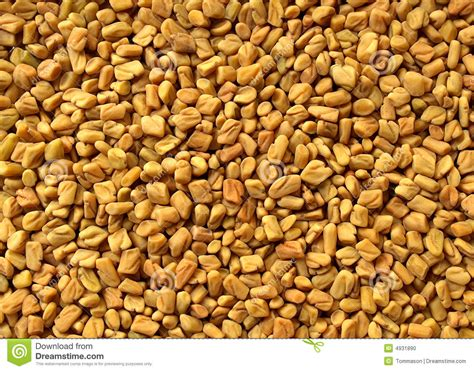 Fenugreek Stock Photo Image Of Food Culinary Methi