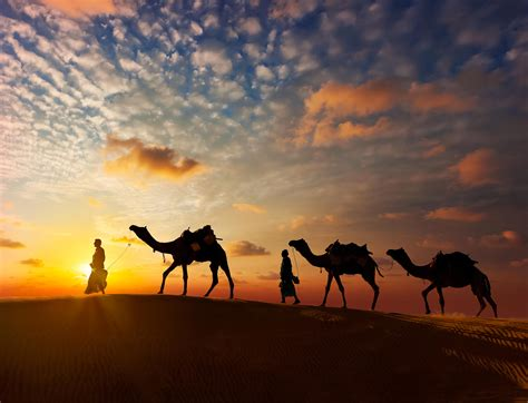 desert camel pushkar sunset horse safaris safari