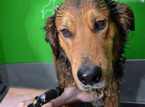 laestige blutsauger bei hund und katze radio tirol