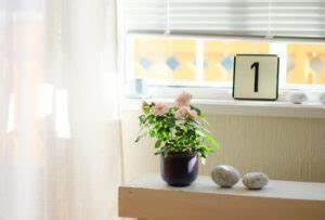 Zimmerpflanzen Feng Shui : zimmerpflanzen und feng shui feng shui ~ Indierocktalk.com Haus und Dekorationen