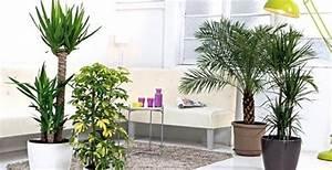 Arbre D Intérieur : les arbres de la maison conseils plantes vertes d 39 int rieur truffaut ~ Preciouscoupons.com Idées de Décoration