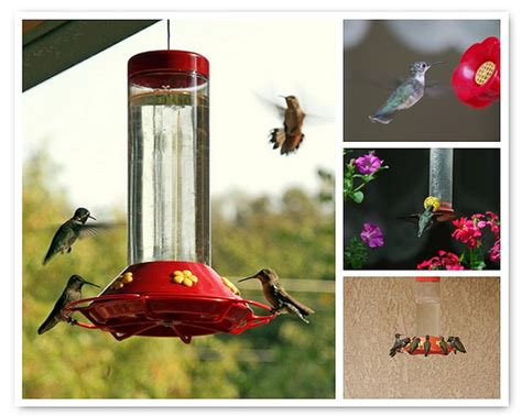 some favorite hummingbird photos these images are not
