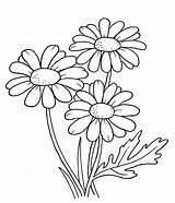Colorear Margaritas Imprimir Dibujos Coloring sketch template
