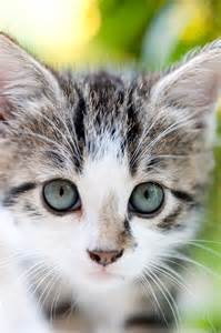 Why Kittens Are Cute