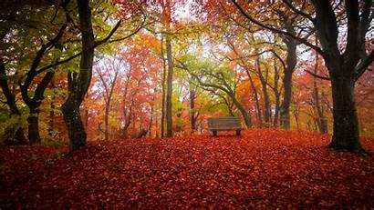 Autumn Fall Desktop Thanksgiving Background Bench Wallpapers