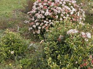 Dessiner Son Jardin : l 39 hiver c 39 est le moment de dessiner son jardin la ~ Melissatoandfro.com Idées de Décoration