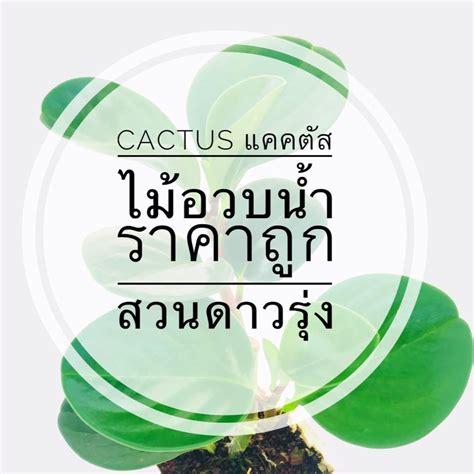 🌹💐🌼🎄🍓 - Cactus แคคตัส ไม้อวบน้ำ ราคาถูก สวนดาวรุ่ง | Facebook