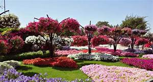 Most Photogenic Gardens Flower Hd Images Morewallpapers ...