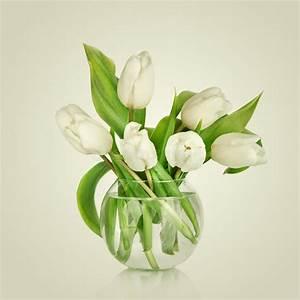 Beau Bouquet De Fleur : beau bouquet des fleurs tulipes blanches photo stock ~ Dallasstarsshop.com Idées de Décoration