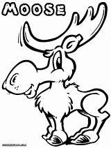 Moose Coloring Pages Cartoon Drawing Print Antlers Animal Getdrawings sketch template