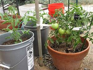 The Complete Guide To Growing Tomatoes In Containers