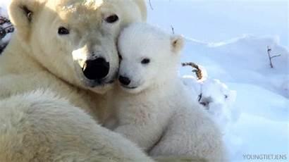 Bear Polar Animal Gifs Ever Cutest Hugging