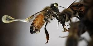 Mittel Gegen Bienen : omega 3 gegen artensterben bienen bekommen ihr fett weg ~ Frokenaadalensverden.com Haus und Dekorationen