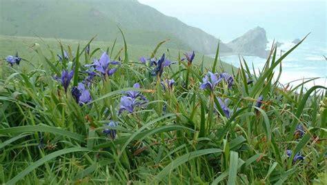 fiore della bellezza iris il fiore della bellezza nel bosco della dea