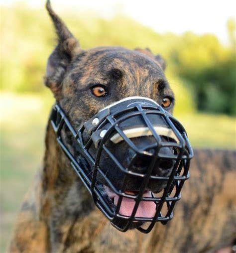 Maulkörbe Für Große Hunde