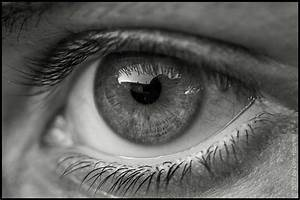 Black And White Macro-Eye | Macro picture taken from an ...