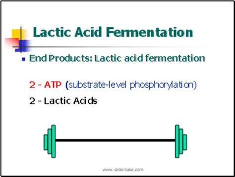 lactic acid normal range substrate level phosphorylation sliderbase