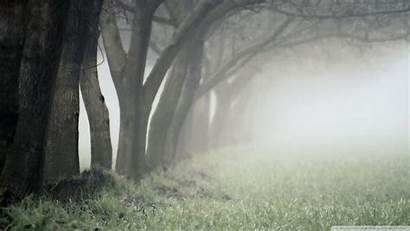 Foggy Forest Fog Background Grey Forests Desktop