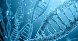 Cf Genetics  The Basics