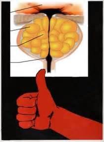 Омен лекарство от простатита