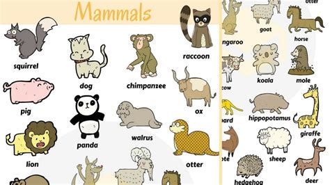 Mammals Vocabulary: Mammal Names for Kids with Pictures
