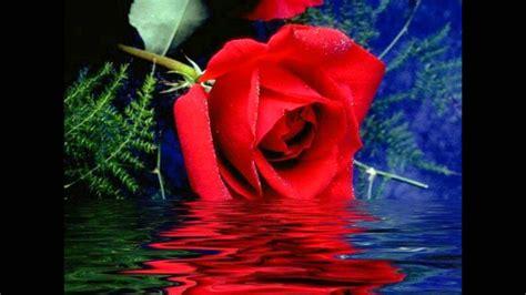 foto fiori bellissimi filmato fiori bellissimi