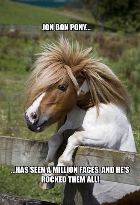 Funny Pony Memes - 30 most funny animal meme pictures and photos