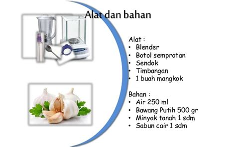 anti nyamuk ekstrak bawang putih