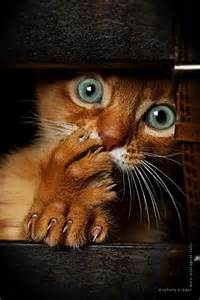scaredy cat scaredy cat kitty kats