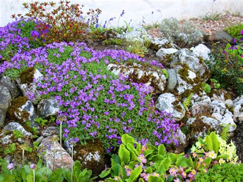 flowers for rockery how to make a rockery saga