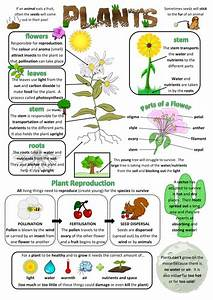 Plant Worksheets And Projects  Primary Science Teaching