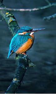 Download wallpaper bird, kingfisher, water, tree free ...