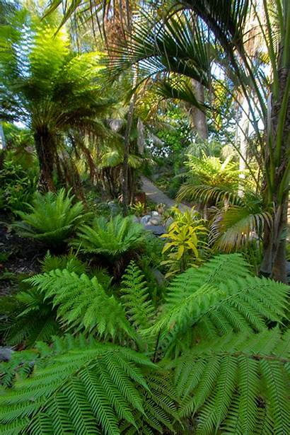 Rainforest Garden Plants Diego Tropical Temperate San