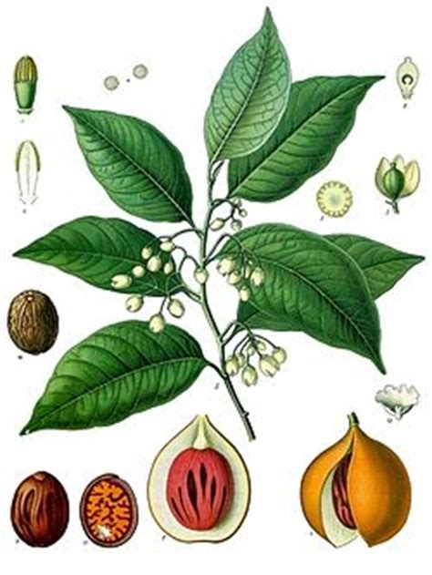 pala wikipedia bahasa indonesia ensiklopedia bebas