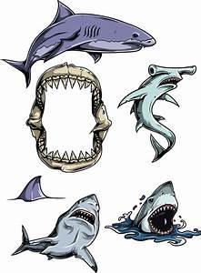 Sharks, Vector, Clipart, Set