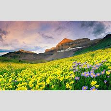 10 Best Nature Images Hd In India With Valley Of Flowers National Park  Hd Wallpapers