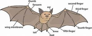 Why Bats Are Good