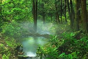 Baum Am Wasser : kostenlose bild holz landschaft natur blatt nebel ~ A.2002-acura-tl-radio.info Haus und Dekorationen