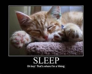 Sleep Cat Meme - Cat Planet | Cat Planet