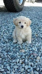 106 Best Images About My Dogs On Pinterest Poodles