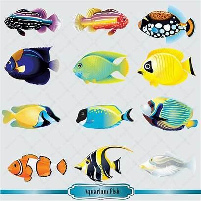 Clipart Aquarium Salt Fish Water Clip Drawing