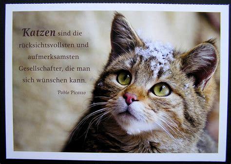 katzen spr 252 che bnbnews co cats katzen zitate katzen