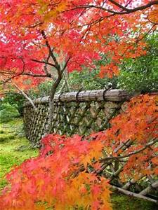 Les Plus Beaux Arbres Pour Le Jardin : jardins japonais de kyoto jardin de koetsu ji ~ Premium-room.com Idées de Décoration