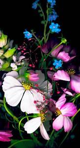 colorful flower black wallpaper sc iphone6s
