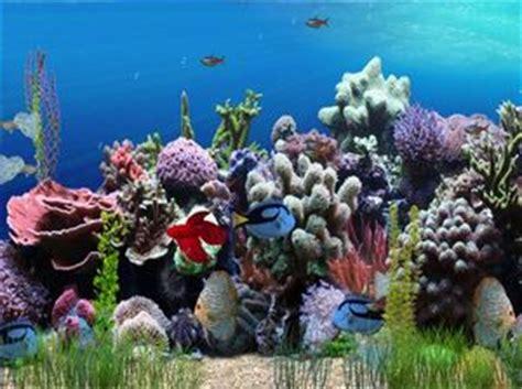 fond d 233 cran anim 233 aquarium site officiel