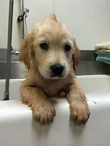 Laisser Un Chien Seul Quand On Travaille : faites la connaissance de wesley un chien adorable qui porte un appareil dentaire ~ Medecine-chirurgie-esthetiques.com Avis de Voitures