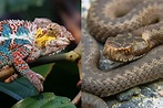 Reptiles: The Ultimate Guide - All You Need To Know About ...
