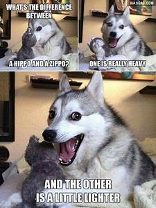 30 Funny Husky Memes That39ll Make You Want To Own One